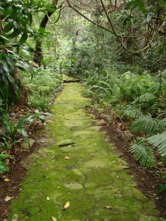Verdant Pathway